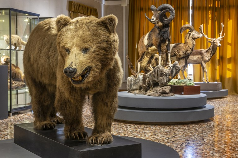 Museo civico di storia naturale