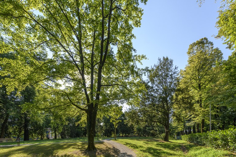 Parco Querini