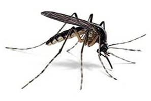 Comune di Pordenone disinfestazione zanzara tigre