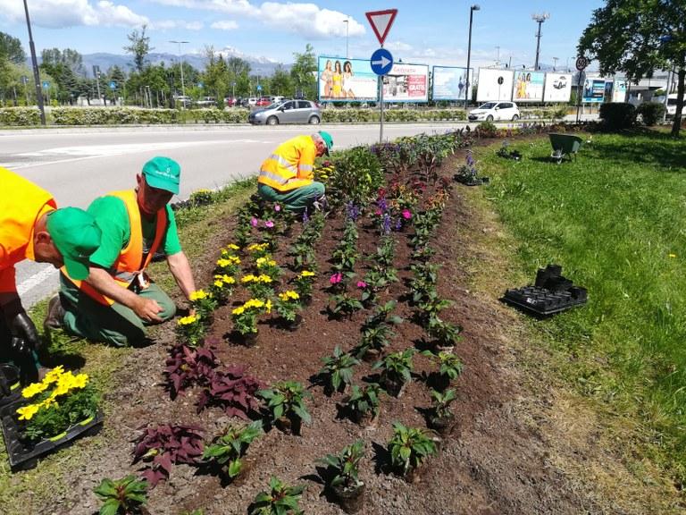 Fioriture e sfalci d'erba in città