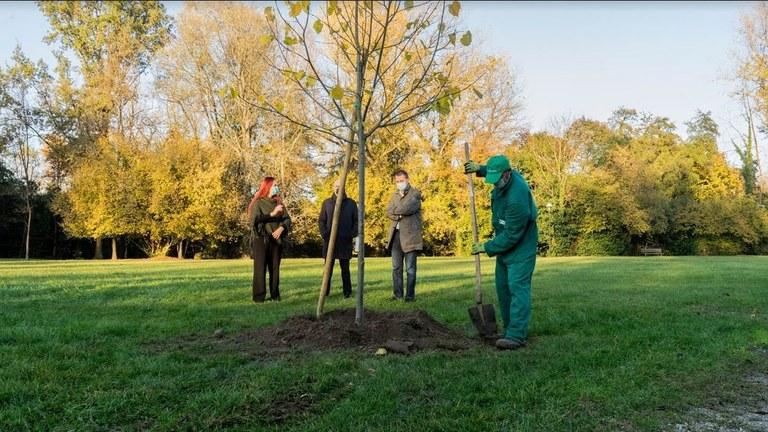In arrivo 2.500 nuovi alberi
