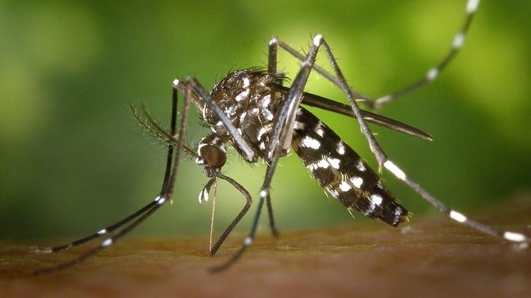 Zanzara tigre, semplici regole per combatterla