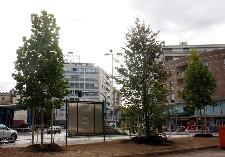 Foto  Gli alberi