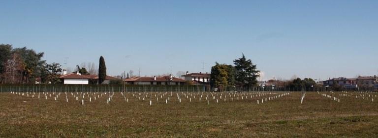 """foto  i 400 alberi del """"bosco"""" a Vallenoncello"""