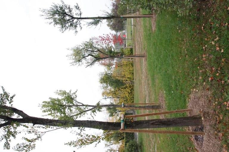Foto Uno scorcio  con  nuovi alberi