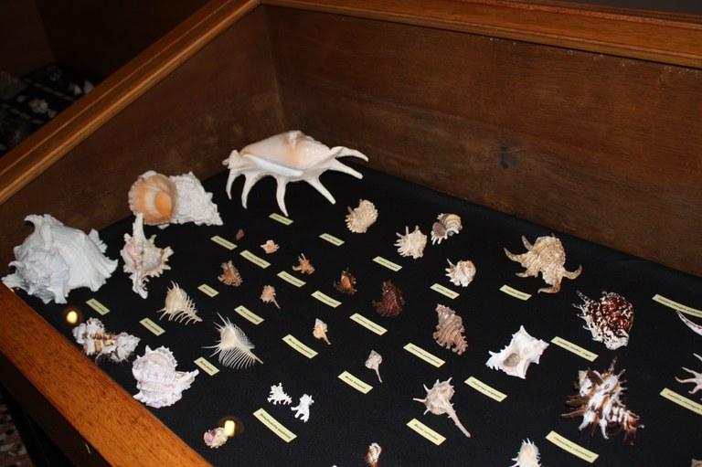 Foto  Collezione  di  conchiglie