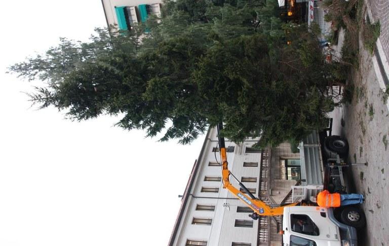 L'albero  in fase di assestamento