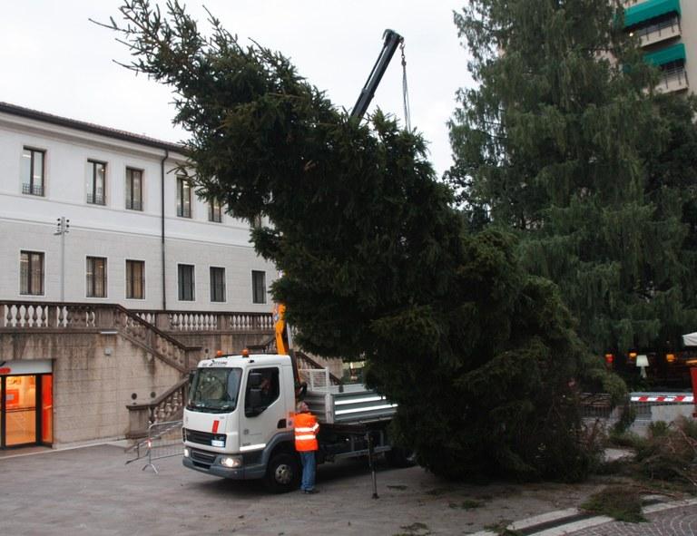 L'albero  issato con una gru