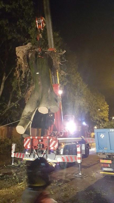 Foto  La rimozione degli alberi caduti