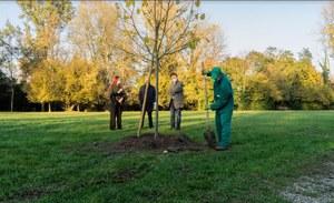 Il primo albero   nell'area verde F.Grizzo  presso il  Castello di Torre