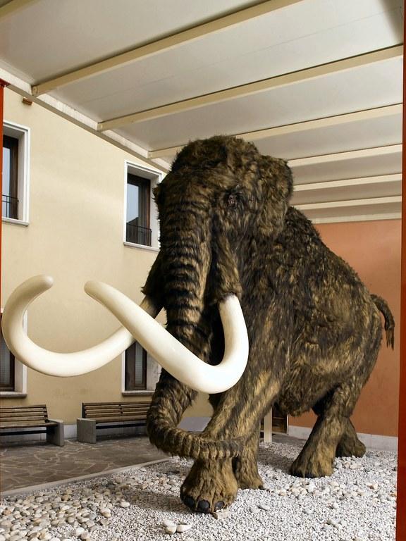 Mammut (piano terra)
