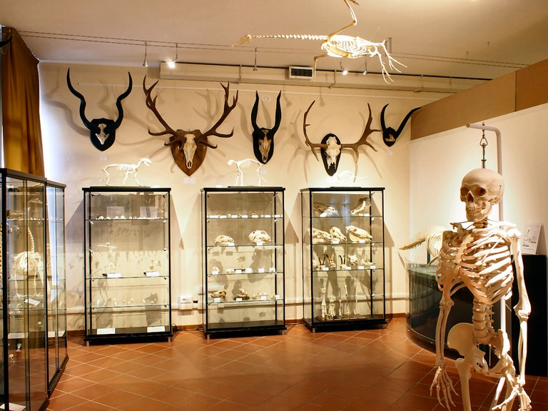 Sala Osteologia (secondo piano)