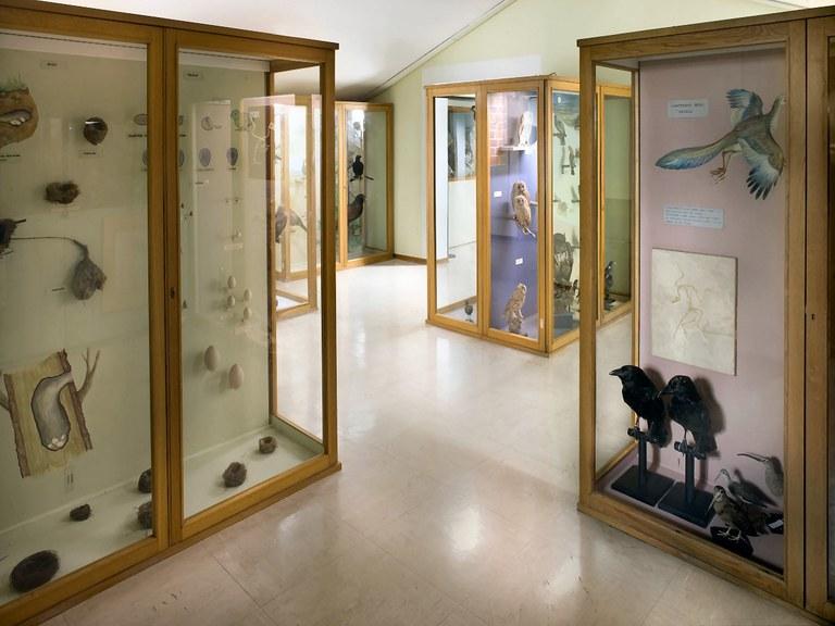 Sala Fauna Friuli Venezia Giulia (terzo piano)