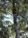 Bat Box installata dal Comune di Pordenone